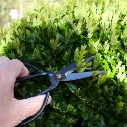Trädgårdssax